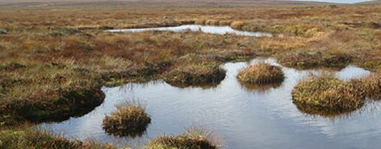 Bog of Allen Nature Centre